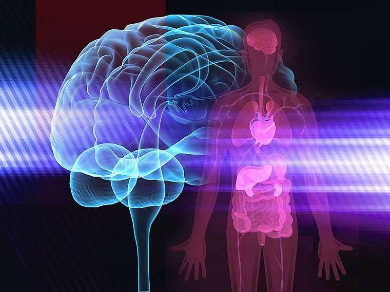 brain_body